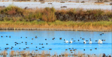 Bitter Lake National Wildlife Refuge – Roswell, New Mexico